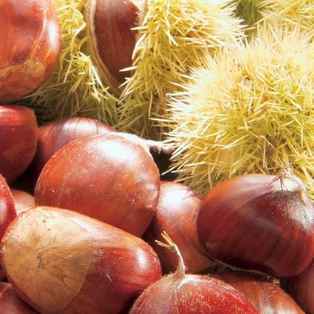 castagne,rimedi naturali castagne,cura corpo castagne