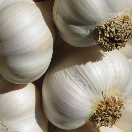 aglio,benefici dell'aglio,cure aglio,salute benessere