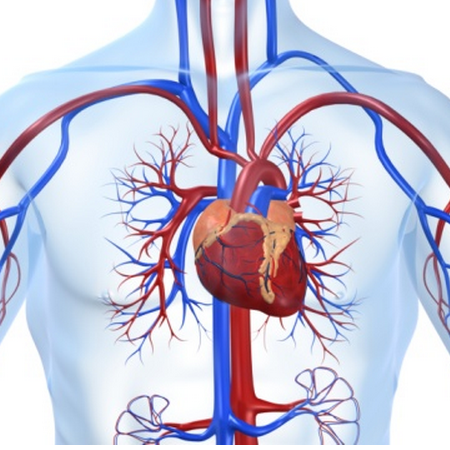 arteriosclerosi,rimedi naturali,vene otturate